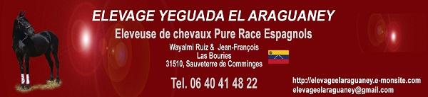 Elevage de Chevaux Pure Race Espagnole - YEGUADA EL ARAGUANEY (31)